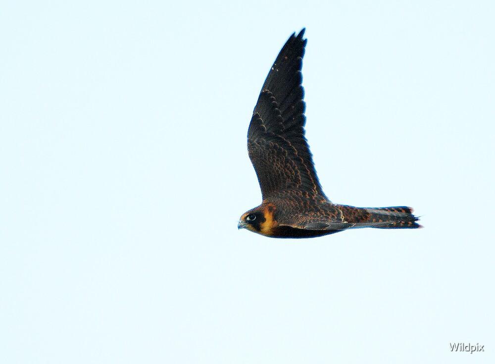Aerial Scythe by Wildpix