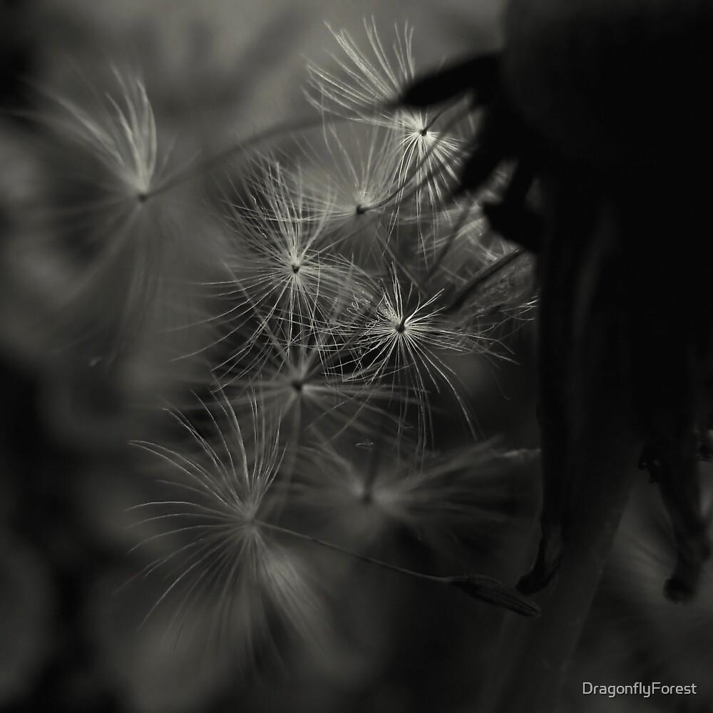 fairies by DragonflyForest