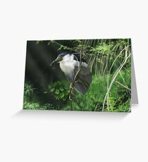 Watcher in the Reeds Greeting Card