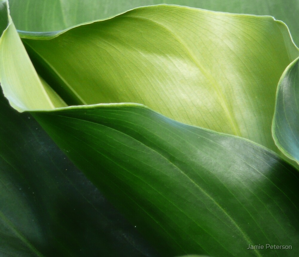 Shades of Green by Jamie Peterson