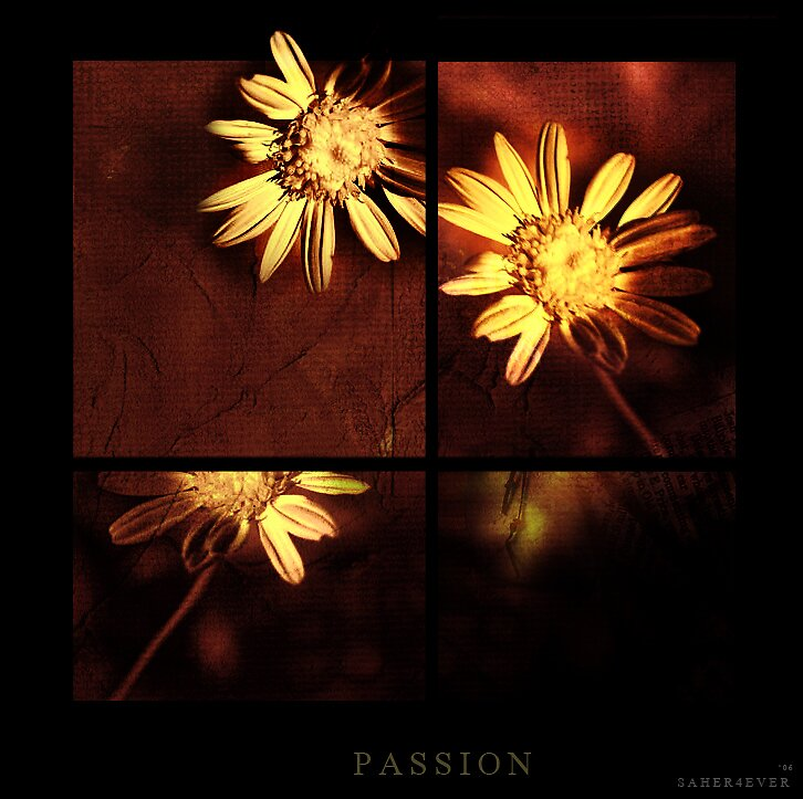 Passion by Saher4ever