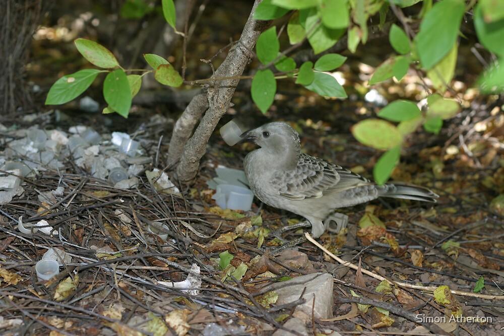 Bower Bird Nest by Simon Atherton
