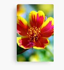 Red Fire Flower Canvas Print
