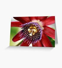 Red and Purple Passion Greeting Card