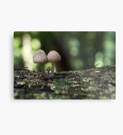 Fungi 3.5 Metal Print