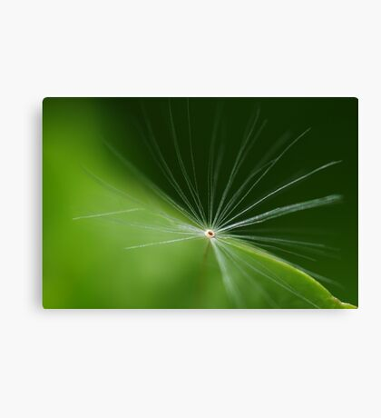One lost Fairy Canvas Print