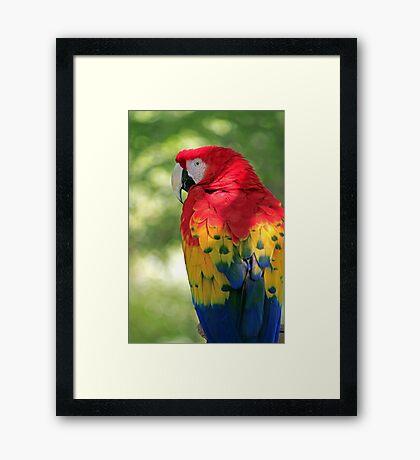 Redhead Parrot Framed Print