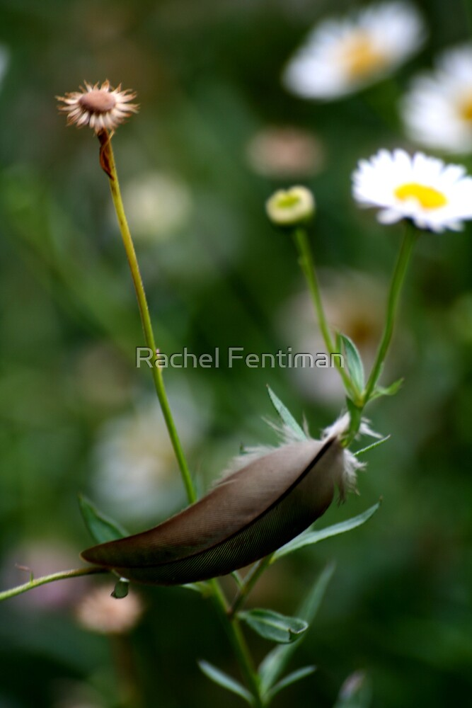 Floating Feather 4/15 by Rachel Fentiman