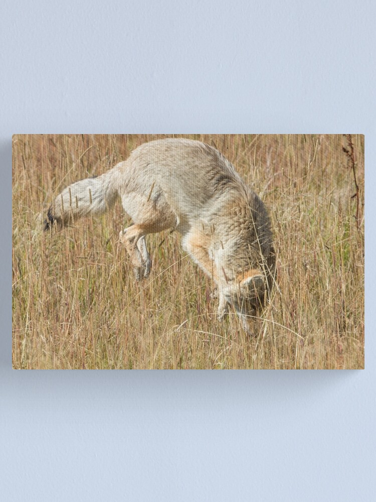 Alternate view of Coyote pounce 2 Canvas Print