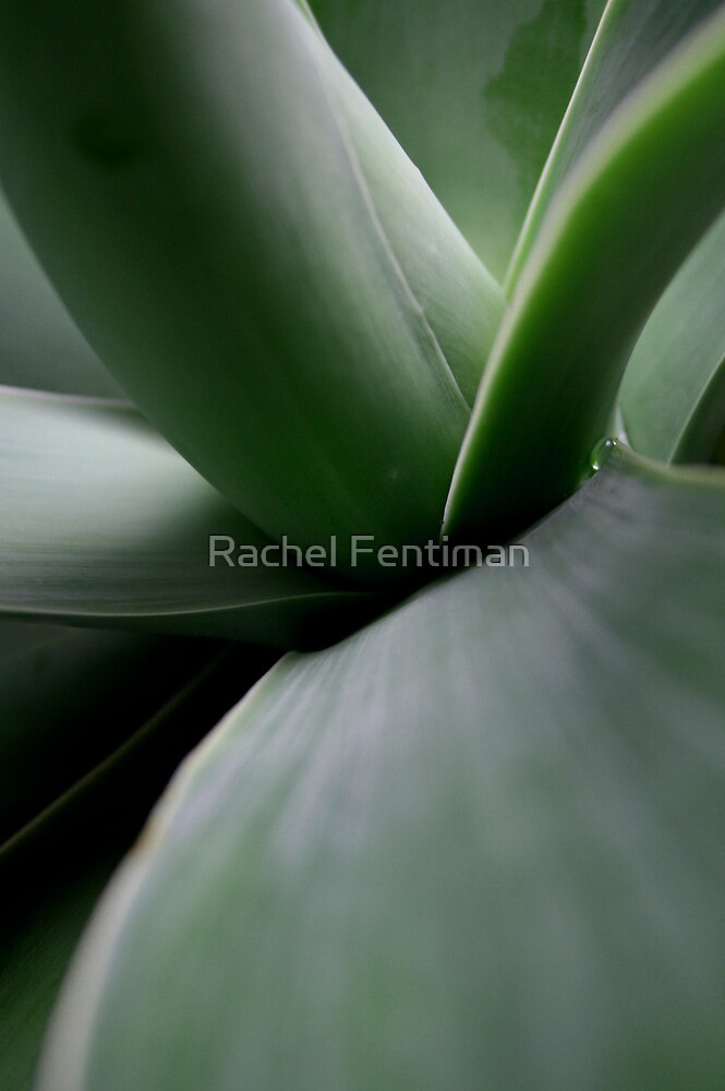 Point of View No.2 4/15 by Rachel Fentiman