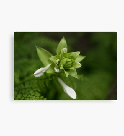 A Little Green and White Canvas Print