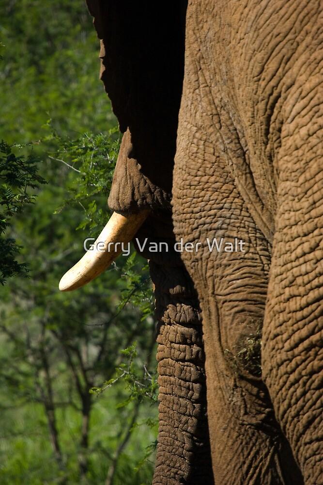 Elephant Side Profile by Gerry Van der Walt