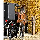 Amish Buggy Parking by thatstickerguy