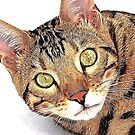 Bengal Cat by TinaGraphics