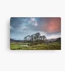 River Brathay Copse Sunrise Canvas Print