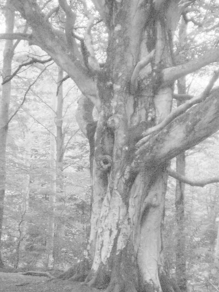 Ghostly Tree by Hippyman