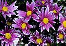 Flowers by Dave Lloyd