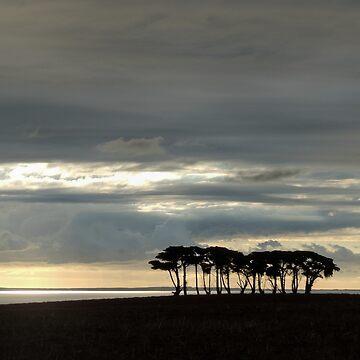 Silhouetted Trees, Stanley, Tasmania, Australia. by kaysharp