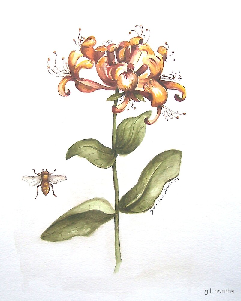 honeysuckle by gill nontha