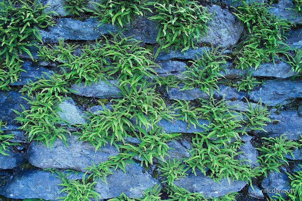 Cumbrian Wall by rmcdermott