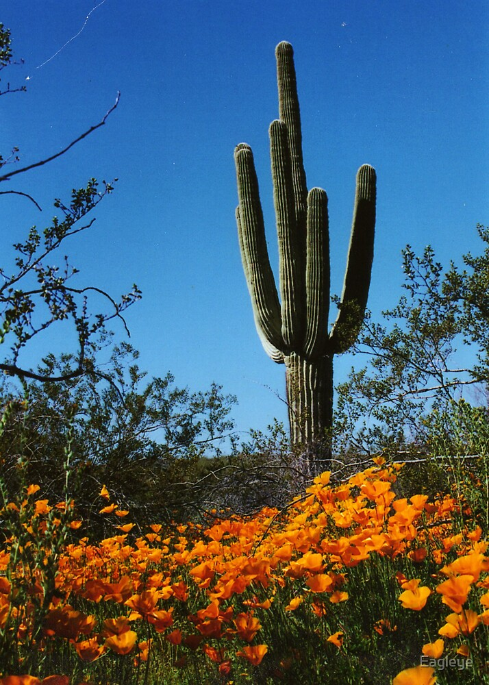 Saguaro and Poppies by Eagleye