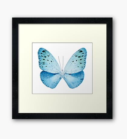 MISS BUTTERFLY EUPLOEA X-RAY White Edition Framed Print