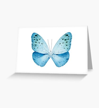 MISS BUTTERFLY EUPLOEA X-RAY White Edition Greeting Card