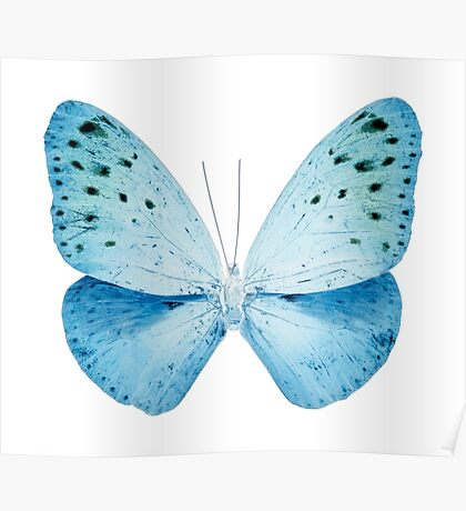 MISS BUTTERFLY EUPLOEA X-RAY White Edition Poster