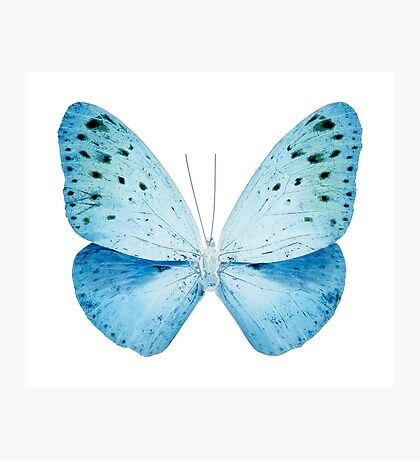 MISS BUTTERFLY EUPLOEA X-RAY White Edition Photographic Print