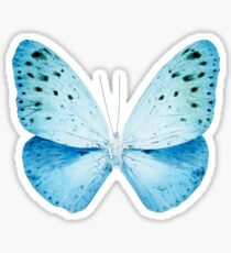 MISS BUTTERFLY EUPLOEA X-RAY White Edition Sticker