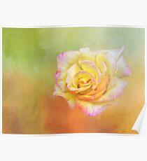 Spring Rose Poster