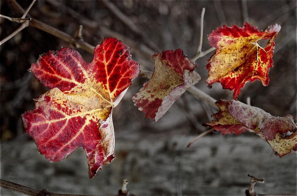 winter vine by JaneH