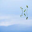 Reflections 3 by Steve Kaiser