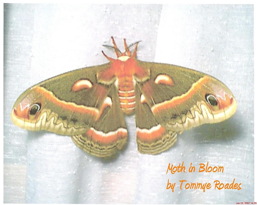 moth in bloom by Tommye Roades
