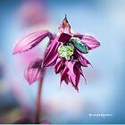 Natural bug life by Stwayne