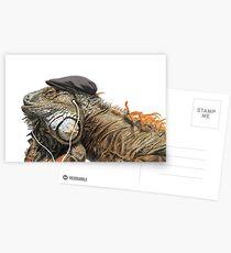 Iguana Postkarten