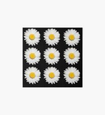 Nine Common Daisies Isolated on A Black Background Art Board