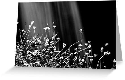 Waterfalls & Wildflowers by Laurie Minor