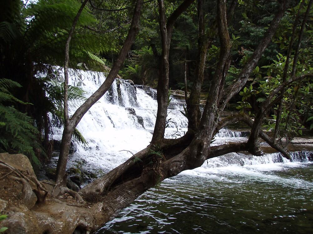 first cascades at Liffey Falls  by gaylene