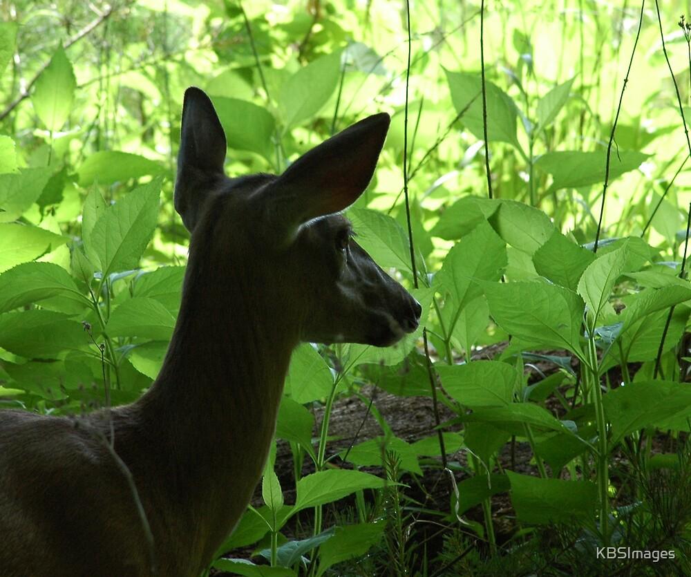 Oh Deer by KBSImages