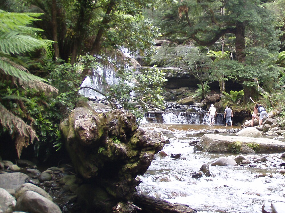 frolicking in the Liffey Falls by gaylene