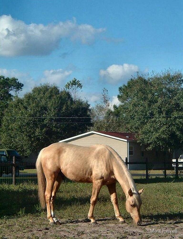 Horse by Matt Ferrell