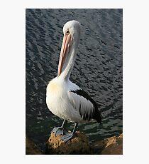 Pelican Preen III Photographic Print