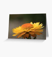 Sunny Side Up II Greeting Card