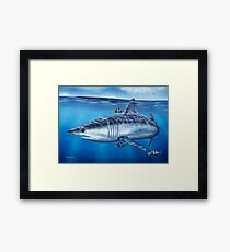 Searching - Mako Shark Framed Print