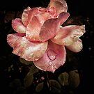 Rose petals with raindrops by Silvia Ganora