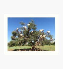 Ziegen in Bäumen Kunstdruck