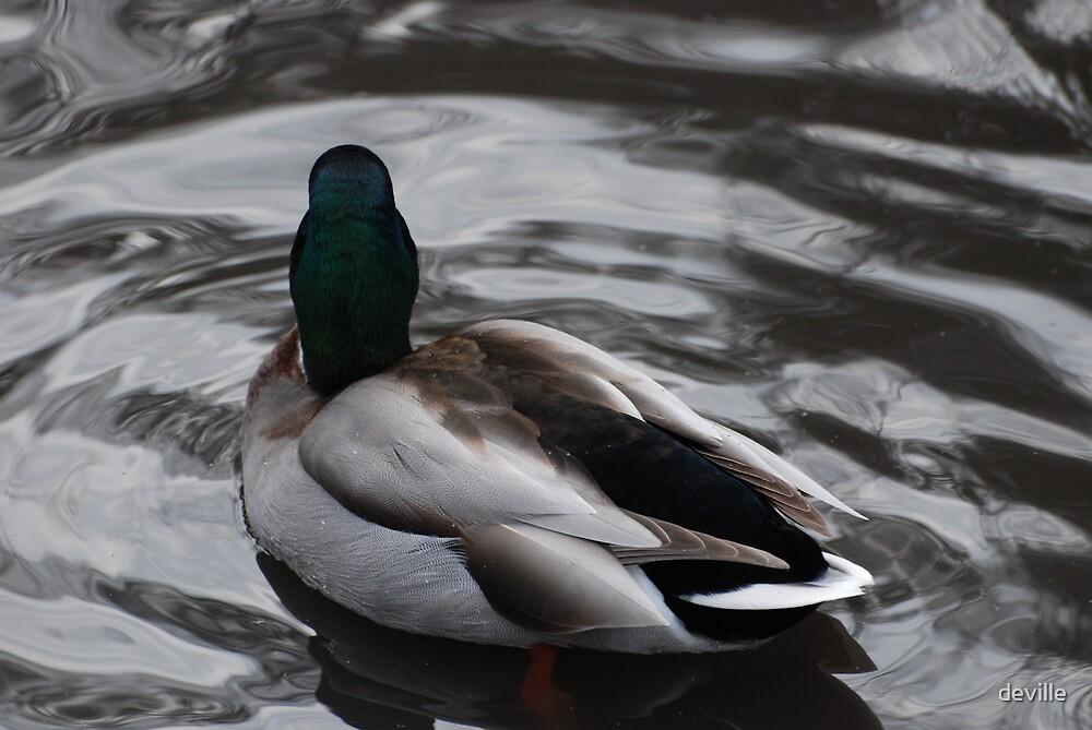 ducks at James Gardens in toronto by deville