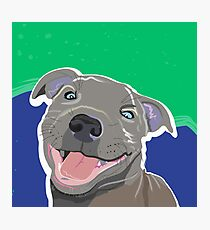 Happy Staffordshire Bull Terrier Dog Portrait Photographic Print