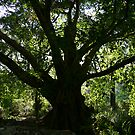 Middle Earth Tree, Ravenshoe by Erland Howden
